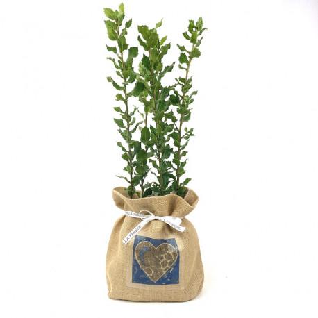 Lot de 5 chênes verts truffiers « sac à cœur » jute - Villa Farese