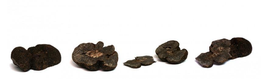 Truffes Fraîches Tuber Melanosporum